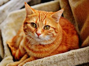 אימוץ חתולים